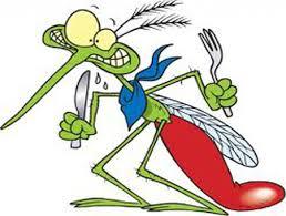 Chỉ muỗi cái mới hút máu…
