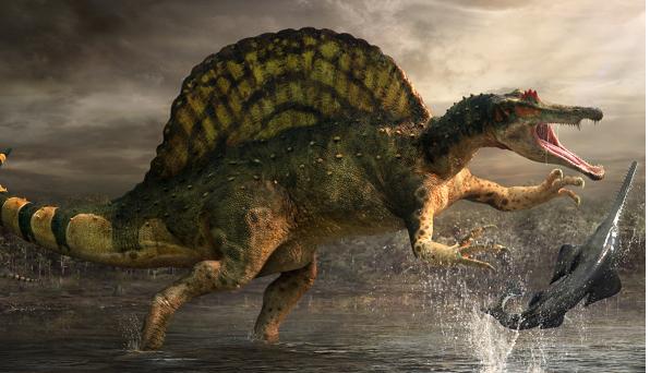 Spinosaurus - Loài này dài hơn 18 m, cao khoảng 6 m và nặng 9 tấn