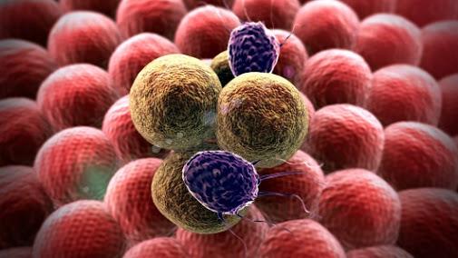 Tế bào ác tính tấn công các tế bào lành tính