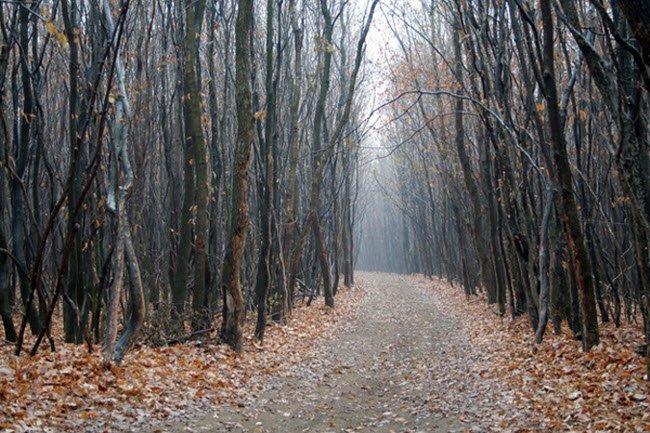 Rừng Hoia Baciu được coi là Tam giác Quỷ ở Romania. Có nhiều câu chuyện  rùng rợn về người mất tích, các thiết bị điện tử dừng hoạt động hay vật thể  ...