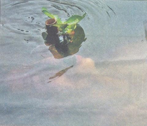 Cách ngụy trang dưới nước.