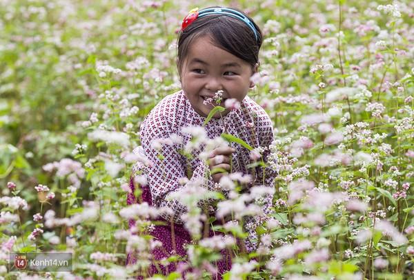 Bé gái vùng cao làm điệu bên ruộng hoa tam giác mạch.