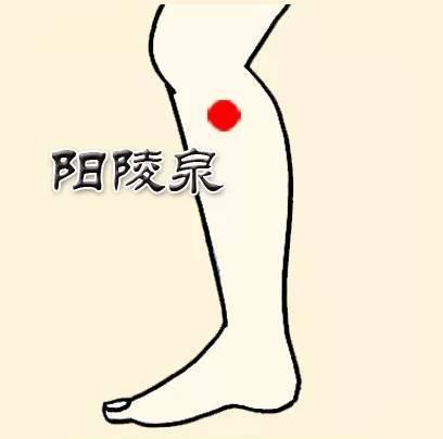 Ấn huyệt Dương lăng tuyền giúp giảm đau vai, sưng ngực, đau thần kinh liên sườn...