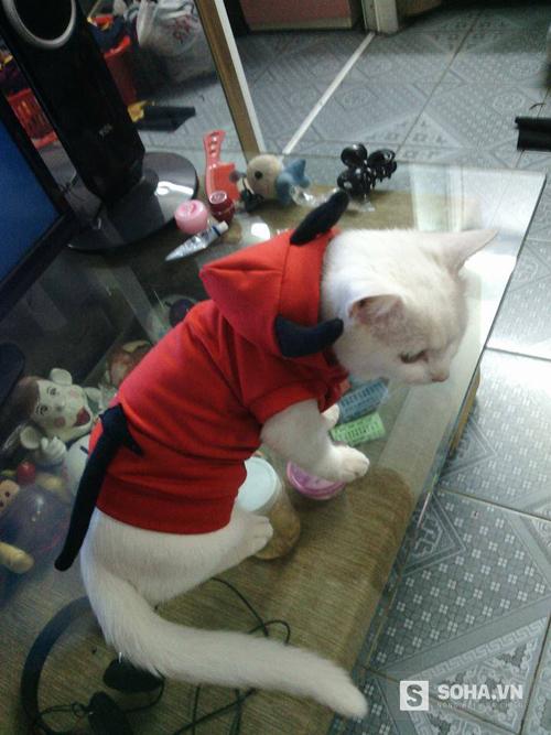 Chiếc áo có mũ này được rất nhiều khách đặt mua tại Puppy Pet Shop.