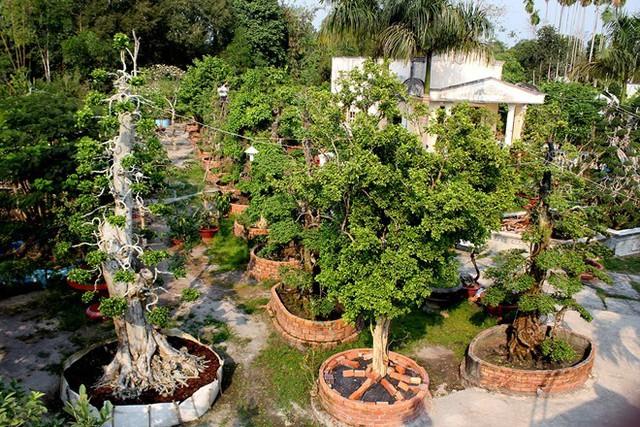 Vườn kiểng 170 tỷ của ông chủ cặp khế 300 tuổi làm xôn xao dư luận. Nhiều người ngờ vực đây là mức giá ảo. Ảnh: Zen Nguyễn.