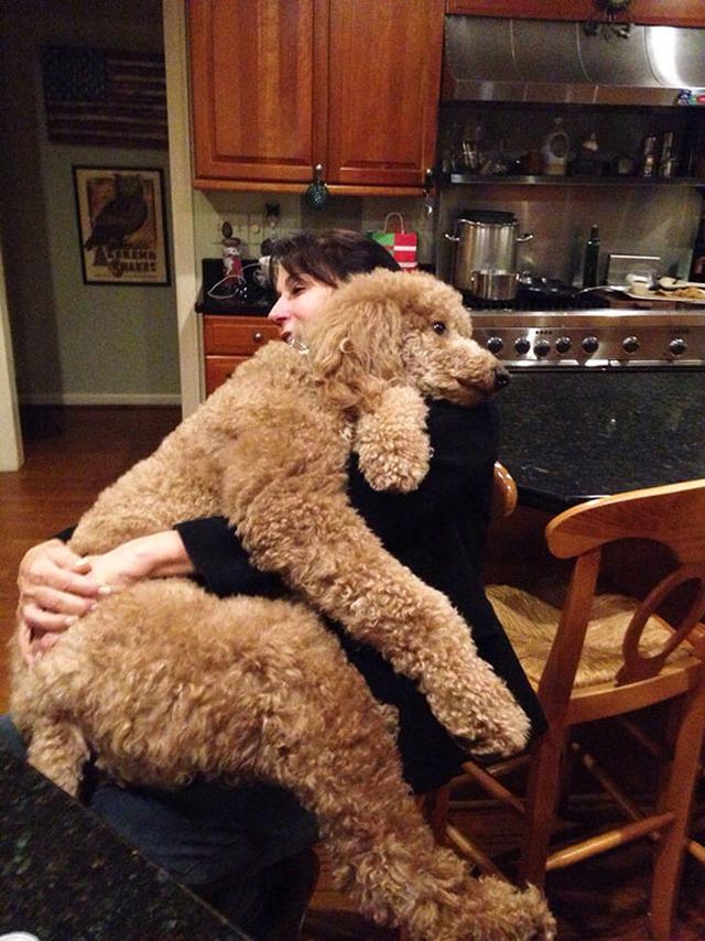 Gặp gỡ 24 chú chó khổng lồ siêu đáng yêu