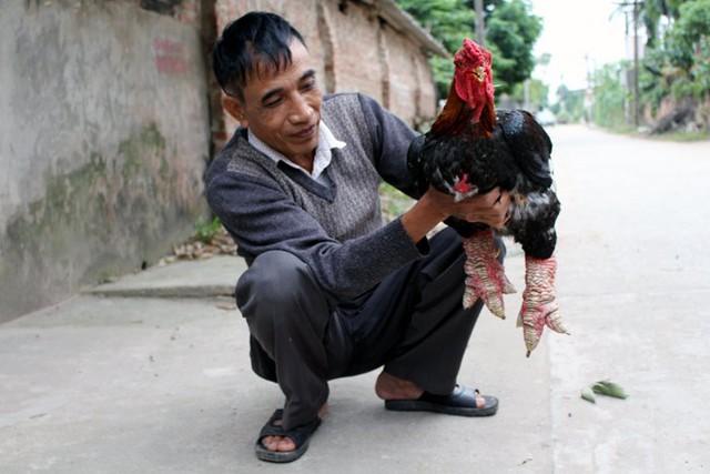 Đã có rất nhiều khách VIP đặt hàng những chú gà Đông Tảo thuần chủng này để ăn Tết