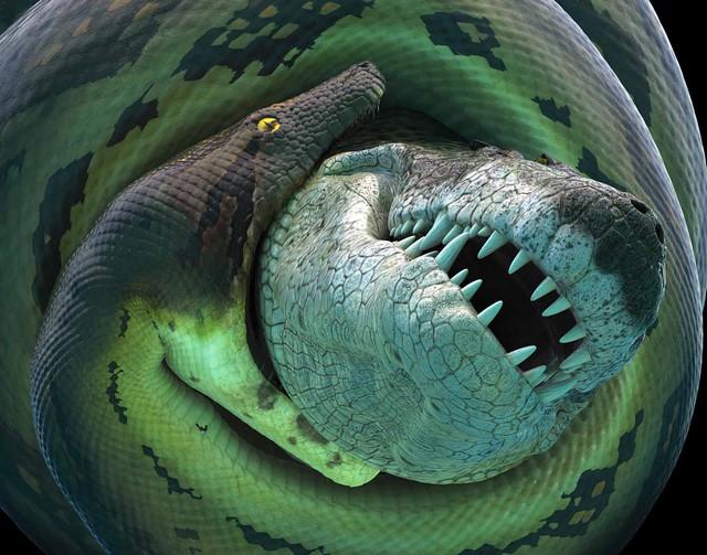 Trăn khổng lồ Titanoboa - Loài này có cơ thể dài hơn 15 m và nặng khoảng 1.135 kg