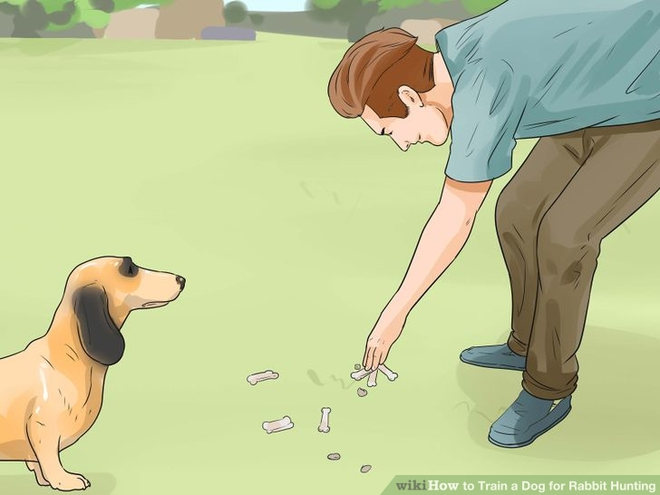 How To Train A Dog To Hunt Rabbits