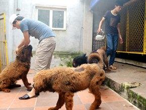 Trại chó ngao Tạng Phượng Hoàng