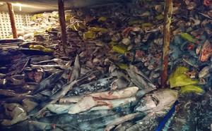 Dân TQ săn lùng báu vật ở Scarborough khiến Philippines không thể im lặng - ảnh 3