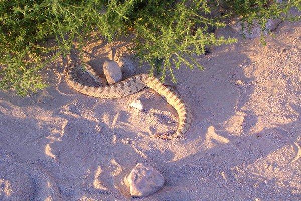 Thay vì lo ngại súng đạn của Taliban, nguy hiểm trong các cuộc huấn luyện này đến từ động vật hoang dã, như rắn độc.