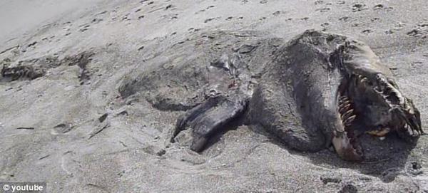"""Chuyện lạ: Xác """"quái vật"""" bí ẩn trên bờ biển New Zealand"""