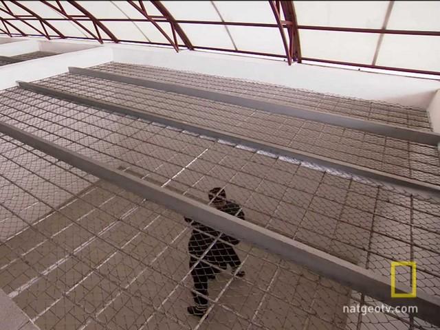 Các phạm nhân tập thể dục trong một phòng giam khác rộng hơn. Không có sân ngoài trời dành cho các phạm nhân ở nhà tù Black Dolphin.
