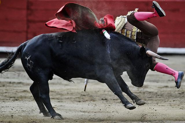 Bò tót húc ngã đấu sĩ tại lễ hội đấu bò tót Senor de los Milagros ở Lima, Peru.