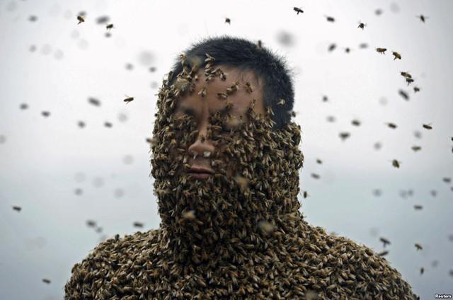 Một người đàn ông sử dụng ong chúa để thu hút hơn 460.000 con ong mật đậu trên cơ thể ở Trùng Khánh, Trung Quốc.