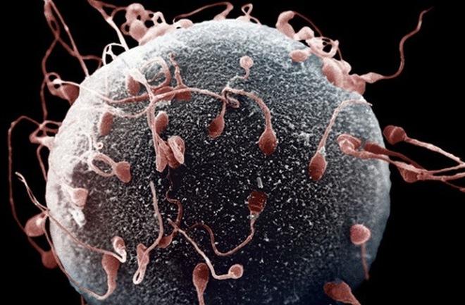 Tinh trùng đuôi dài có lợi cho khả năng sinh sản