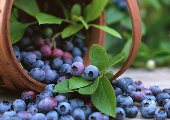 7 loại rau quả giàu chất chống oxy hóa, tốt cho chị em