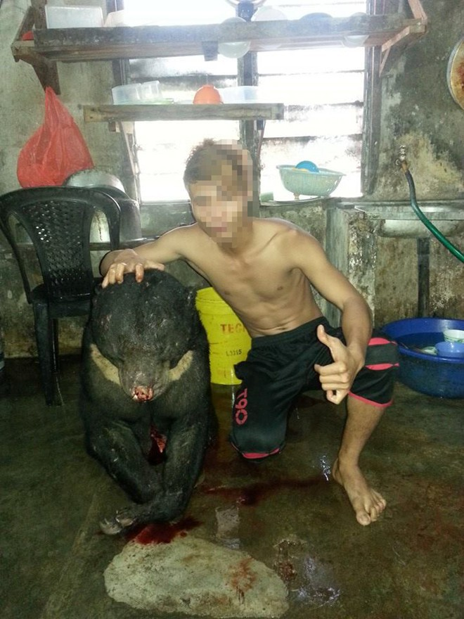 """Phẫn nộ nam thanh niên giết gấu """"khoe chiến tích"""" trên Facebook"""