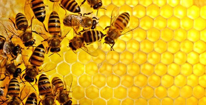 Mật ong: Thêm nhiều công dụng chưa ai biết