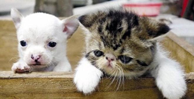 Lạ lùng mèo đẻ ra chó ở Trung Quốc
