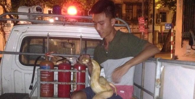 Bị về phường vì mang theo con trăn gần 20 kg diễu phố