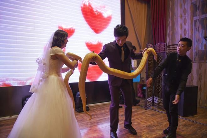 Cặp đôi chơi trội tặng trăn vàng cho nhau trong lễ cưới - Ảnh 1.