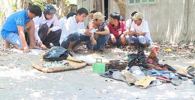 Công an huyện Long Hồ triệt phá một trường gà cực lớn