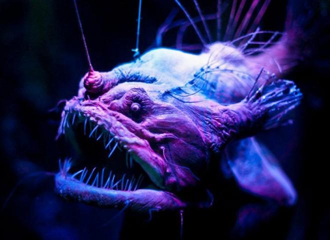 Hội chứng sợ biển: Nỗi ám ảnh kinh hoàng đến từ đại dương! - Ảnh 6.