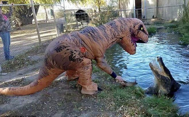 7 ngày qua ảnh: Mạo hiểm giả khủng long để trêu ghẹo cá sấu