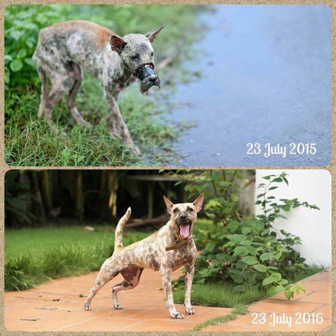 Rớt nước mắt với hình ảnh chú chó bị hoại tử mõm sau 1 năm - Ảnh 4.