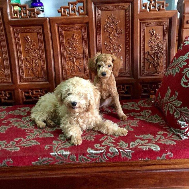 Người giúp việc gây phẫn nộ khi giết chết 2 chú chó của chủ nhà - Ảnh 1.