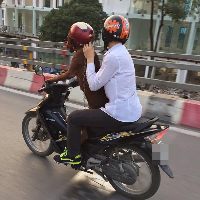 Hình ảnh cực lạ trên đường phố Hà Nội - Ảnh 3.