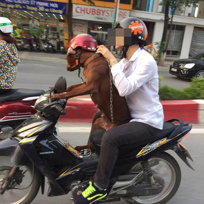 Hình ảnh cực lạ trên đường phố Hà Nội - Ảnh 2.