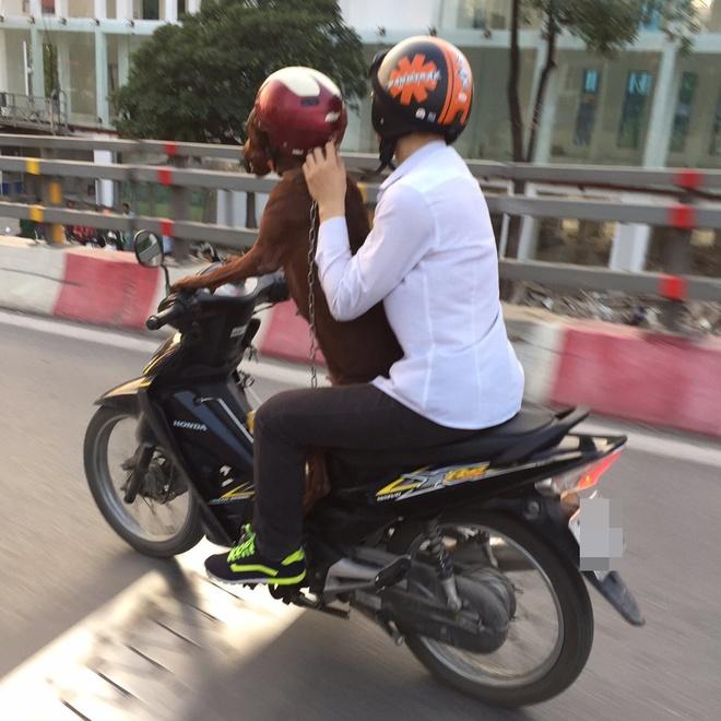 Hình ảnh cực lạ trên đường phố Hà Nội - Ảnh 1.