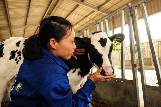 Cùng ngắm những chú bê true organic đầu tiên ở Việt Nam tại trang trại TH - Ảnh 2.