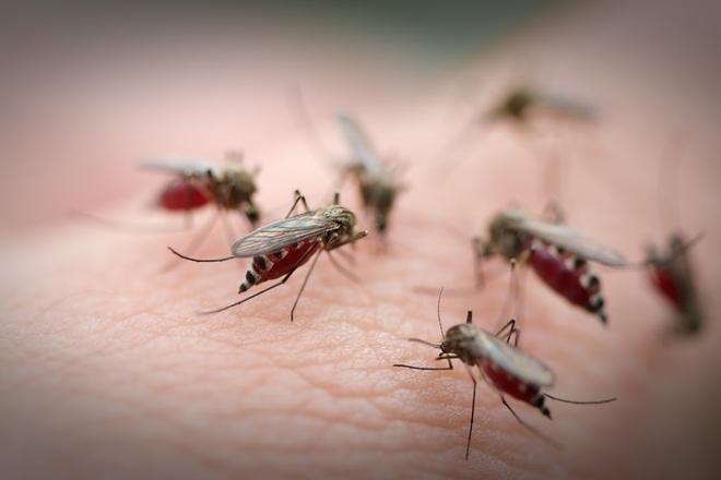 Tại sao lúc nào muỗi cũng đốt bạn thay vì người bên cạnh? - Ảnh 1.