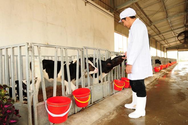 Cùng ngắm những chú bê true organic đầu tiên ở Việt Nam tại trang trại TH - Ảnh 3.
