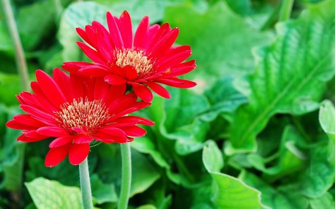Đắt đến mấy cũng nên mua thêm hoa này đặt trong nhà ngày Tết, tài lộc rủng rỉnh cả năm - Ảnh 1.