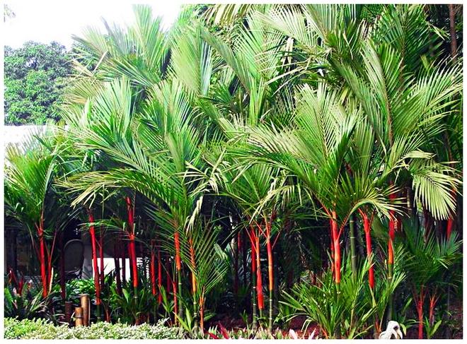 Trước nhà có 1 trong 6 loài cây này, gia đình sẽ tránh được nhiều xui xẻo trong năm - Ảnh 2.