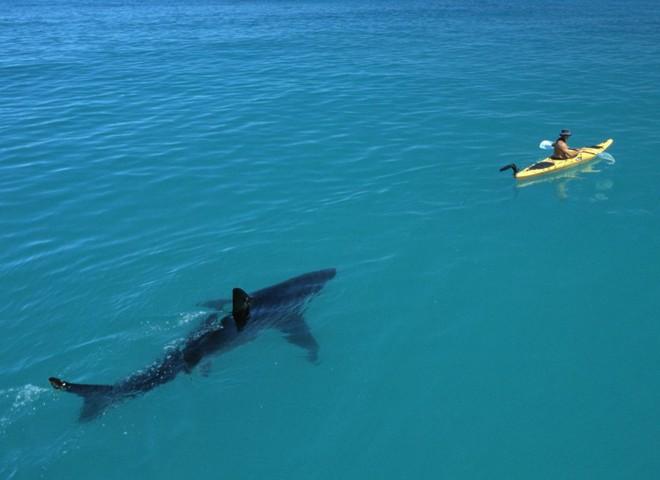 Hội chứng sợ biển: Nỗi ám ảnh kinh hoàng đến từ đại dương! - Ảnh 14.