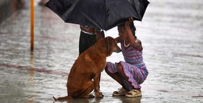 Tại sao loài chó có thể cảm nhận được cơn bão sắp đến?