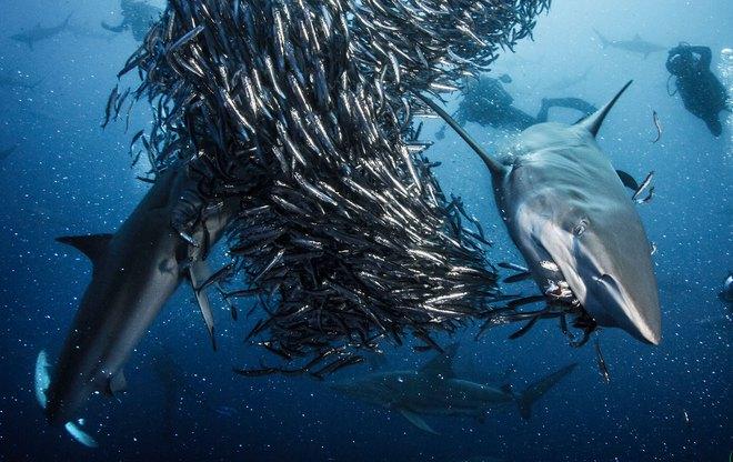 Những bí quyết đơn giản giúp bạn đi biển mà không lo cá mập! - Ảnh 2.