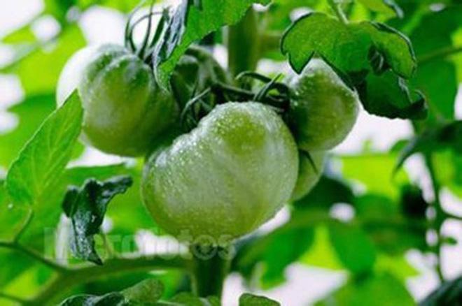 9 loại rau củ cực độc bác sĩ khuyên bạn tuyệt đối không ăn - Ảnh 2.