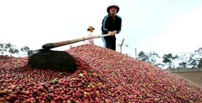Xuất khẩu cà phê: Việt Nam chỉ được 2 USD, Starbucks được những 200 USD