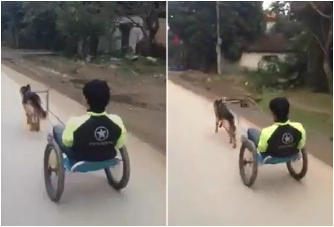 Chó kéo xe băng băng trên phố khiến dân mạng tròn mắt - Ảnh 1.