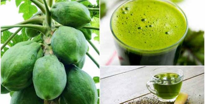 Chữa bệnh gout bằng đu đủ và lá trà xanh