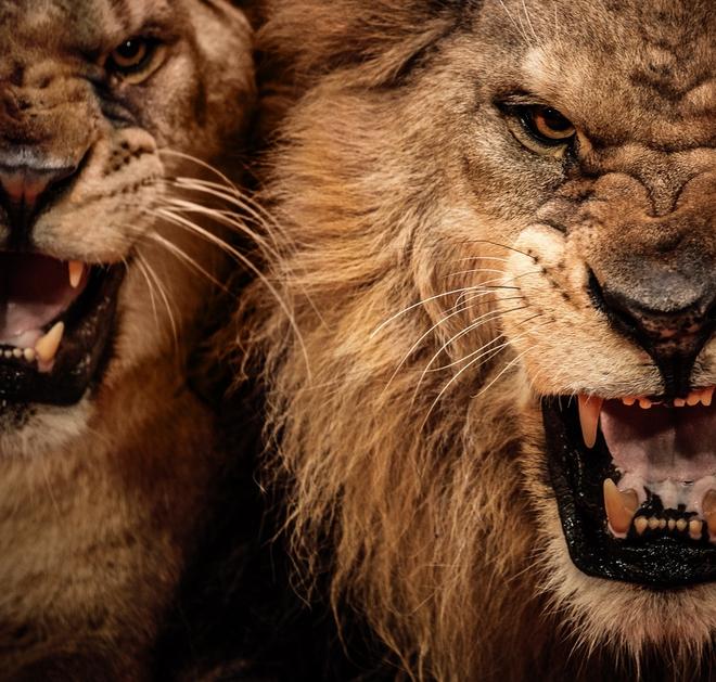 Cặp quái thú ăn thịt người đáng sợ nhất lịch sử thế giới - Ảnh 1.