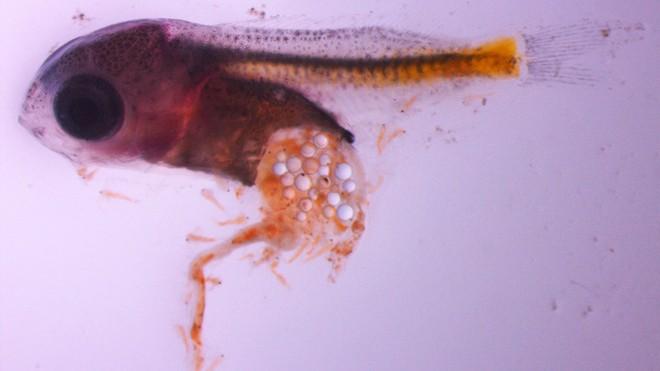 Hạt vi nhựa: Kẻ giết người âm thầm đang rình rập quanh chúng ta - Ảnh 2.