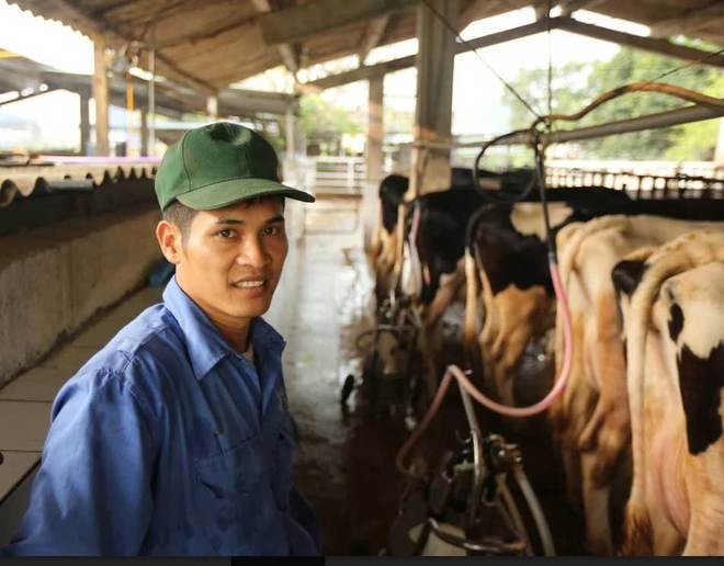 Hiếm có Việt Nam: Thị trấn 600 tỷ phú, lái ôtô dạo thăm bò - Ảnh 2.
